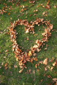 1093126_heart_of_leaves_21