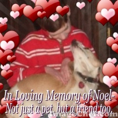 in-loving-memory-of-noel